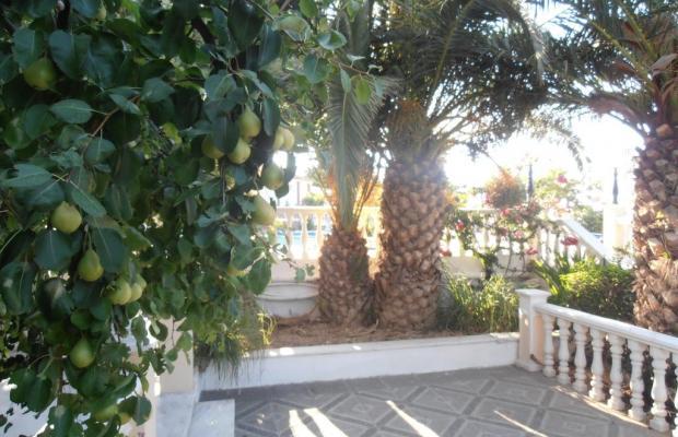 фотографии Samos Sun изображение №16