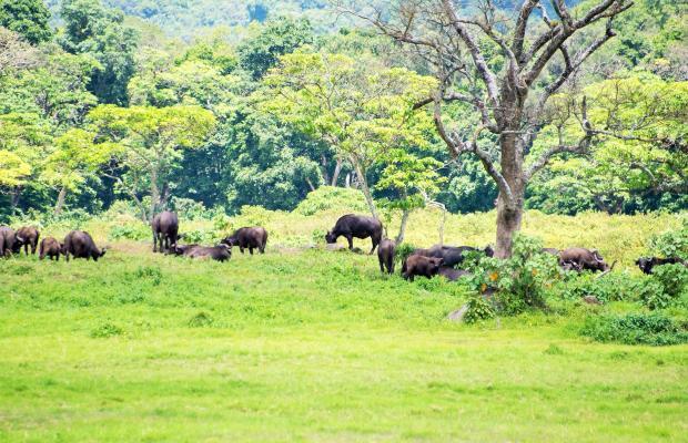 фотографии Arusha Travel Lodge изображение №4