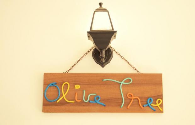 фотографии отеля Olive Tree Hostel изображение №11