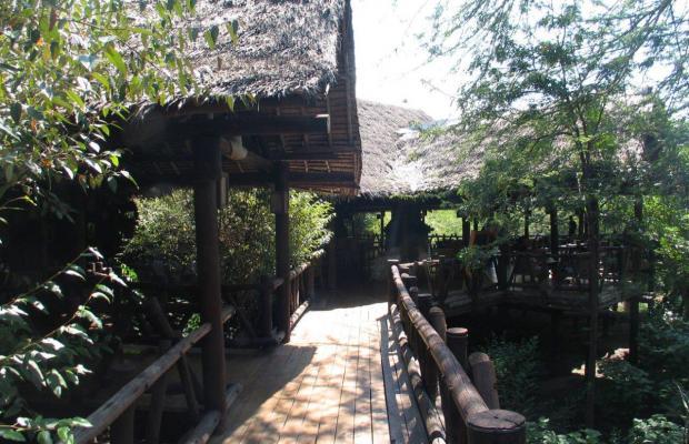 фотографии отеля Mara Simba Lodge изображение №7