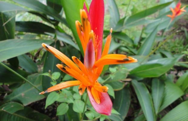 фотографии La Ceiba изображение №8