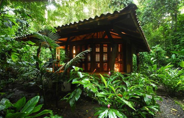 фотографии отеля Playa Nicuesa Rainforest Lodge изображение №3