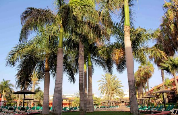 фотографии Oasis Village изображение №8
