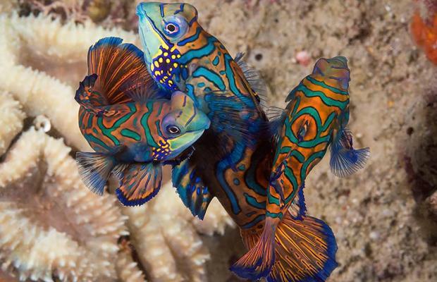 фотографии Wakatobi Dive Resort изображение №16