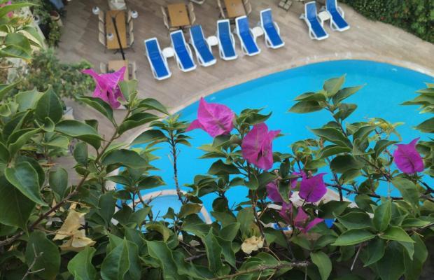 фото Orkide изображение №6