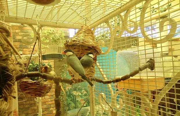 фото отеля Анита (Anita) изображение №21