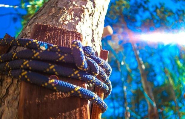 фото Какаду (Kakadu) изображение №2