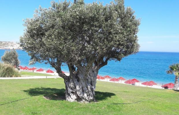 фотографии отеля Kolymbia Beach изображение №3