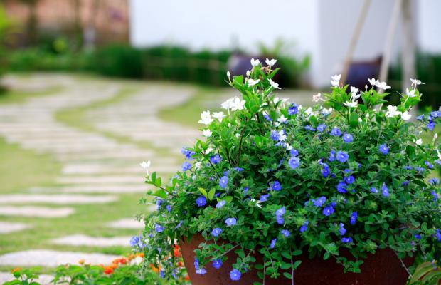фото отеля Lotus Muine Resort & Spa изображение №29