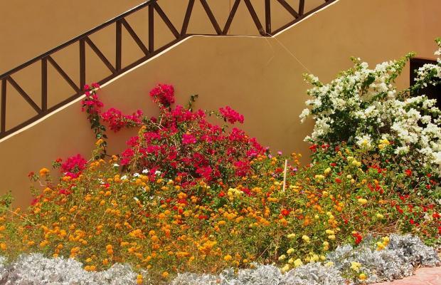 фотографии Wadi Lahmy Azur изображение №8