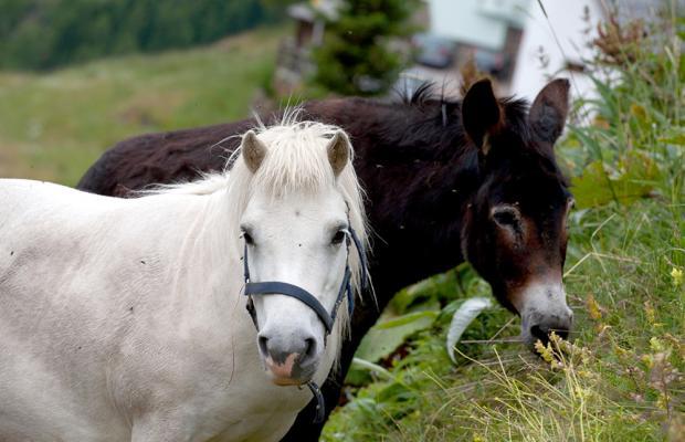 фотографии Alpengasthof Gaislachalm (Альпенгастхоф Гаислачалм) изображение №16