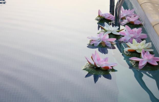фото Dolphin Antiparos Villas and Suites изображение №10